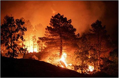 Trees burn