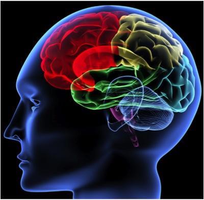 Triune Brain