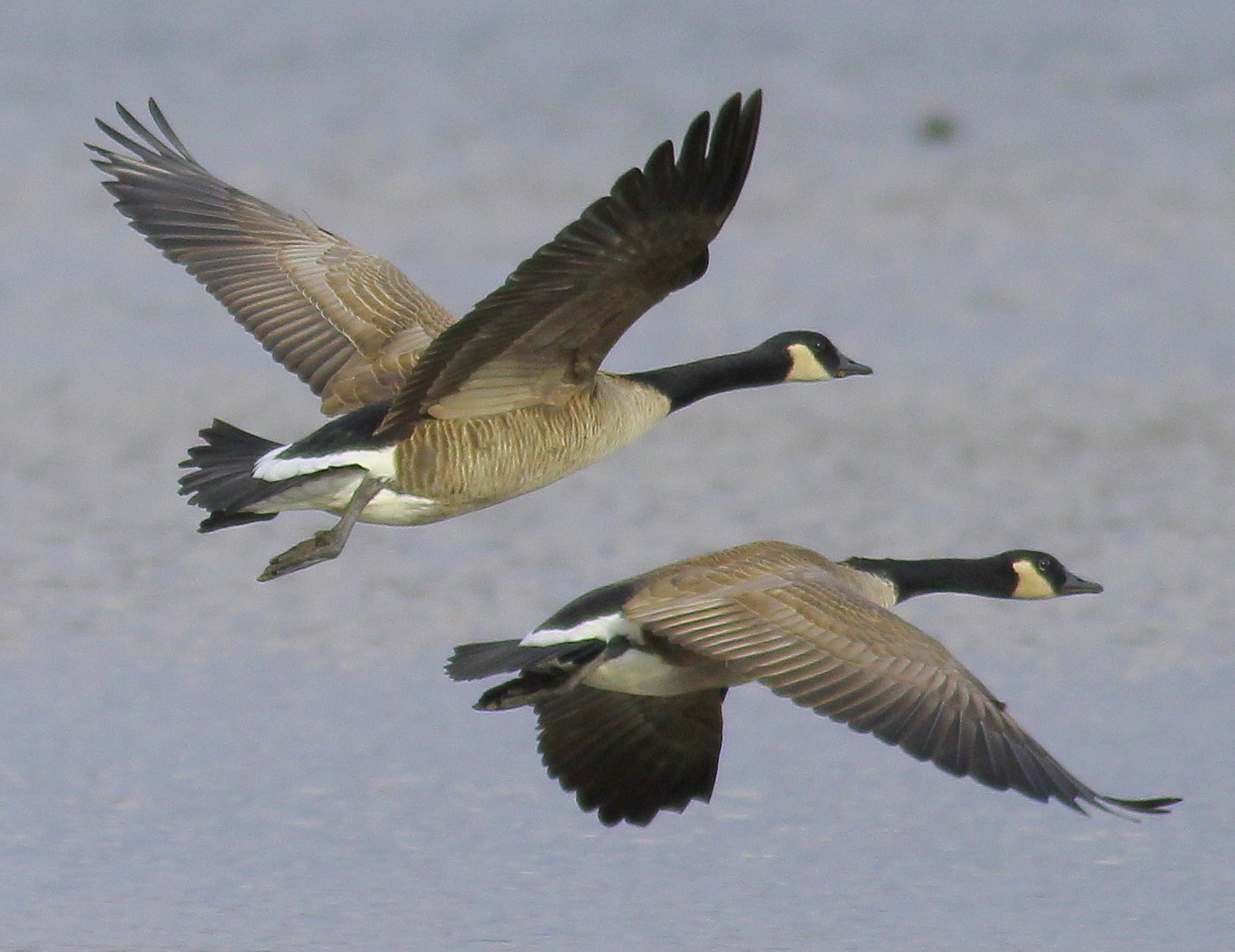 wild geese by oliver essay Definition of wild geese in this essay, perkins examines oliver's call for a sympathetic union between the self and nature we can become wild as the geese.