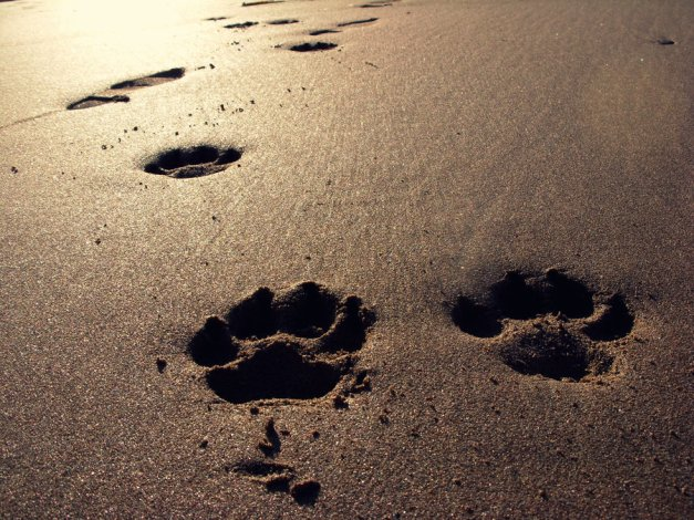 paw_prints_in_the_sand_by_essjayycee-d2ytowo